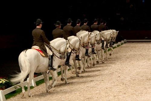Escuela española equitacion en Viena