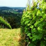 Enoturismo en Austria, vinos austriacos