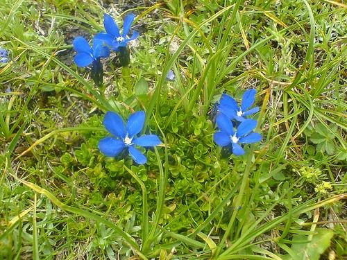 Flores en Austria