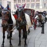 Los Fiaker, coches de caballos vieneses