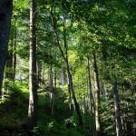 La flora en Austria, los bosques austriacos
