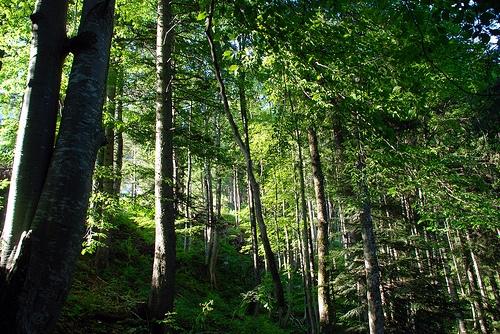 Bosque en Austria