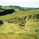 Weinviertel y su vino