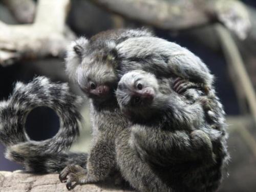 Monos Tities en Vivarium