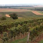 Los vinos de Burgenland