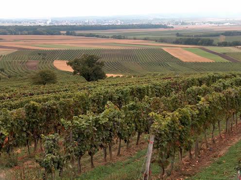 Viñedos de Burgenland