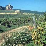 Los elegantes viñedos de Bad Vöslau