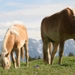Fohlenhof Ebbs y sus increíbles equinos