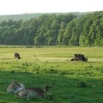 Reserva Lainzer Tiergarten en Viena
