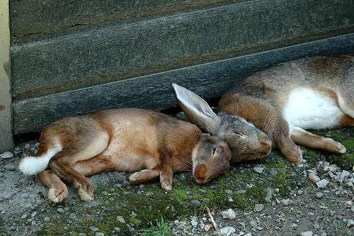 Conejos en el parque salvaje Pfander