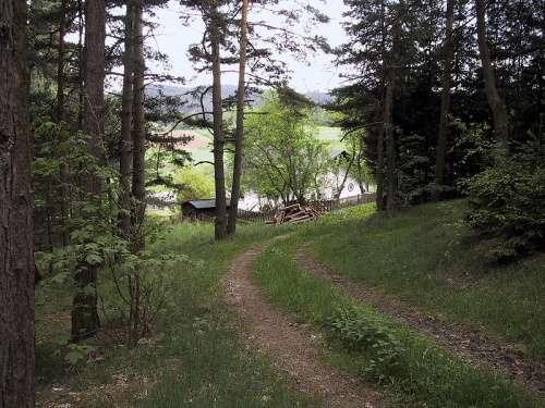 Bosques en Waldviertel