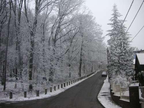 Wienerwald o bosques de Viena